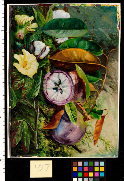 107. Foliage, Flowers, and Seed Vessels of Cotton, and Fruit of. © RBG KEW