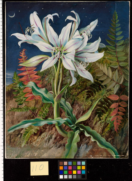 110. Night-Flowering Lily and Ferns, Jamaica.. © RBG KEW