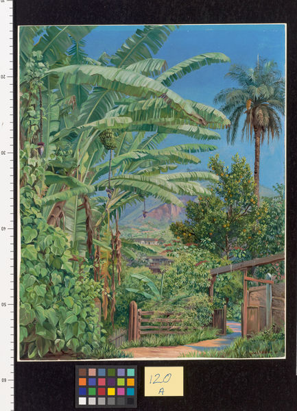 120. Bananas and Orange Trees, a Palm and a Bush of Noche Buena. © RBG KEW