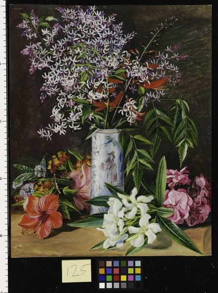 125. Selection of cultivated Flowers, painted in Jamaica.. © RBG KEW