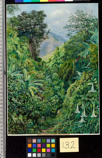 132. Valley behind the Artist's House at Gordontown, Jamaica.. © RBG KEW