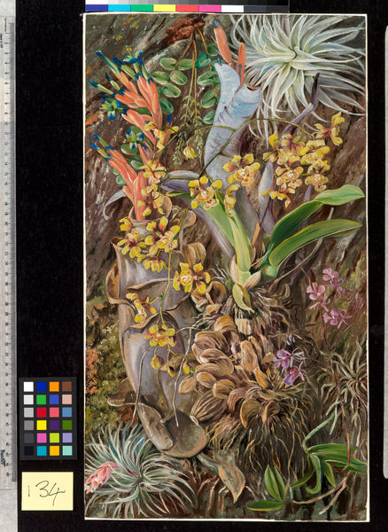 134. Group of Epiphytal Orchids and Bromeliads, Brazil.. © RBG KEW