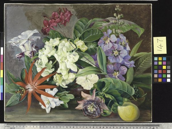 147. Cultivated Flowers; painted in Jamaica.. © RBG KEW