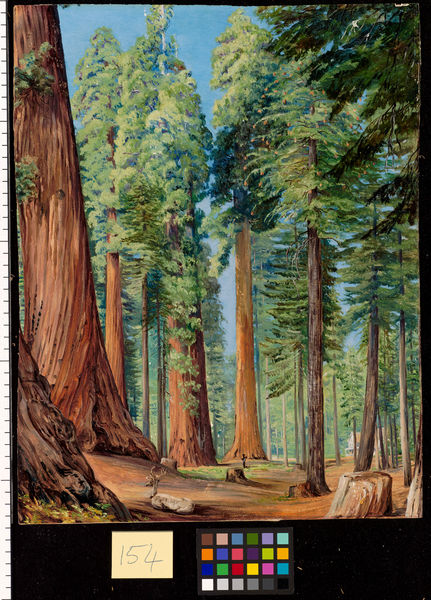 154. The Calaveras Grove of the Big Tree, or Wellingtonia, in th. © RBG KEW