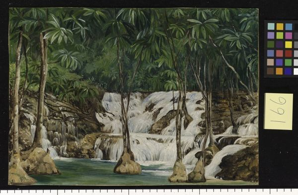 "166. One of the Sources of the"" Roaring River, Jamaica. 166. One of the Sources of the"" Roaring River, Jamaica.. © RBG KEW"
