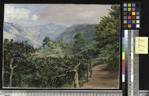 177. Coffee Plantation at Clifton Mount, and the Blue Mountains. © RBG KEW
