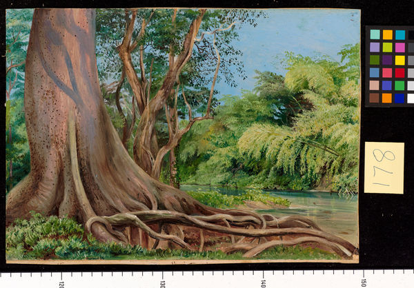 178. Snake Tree and Bamboos, on Spanish River, Jamaica.. © RBG KEW