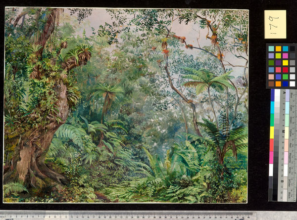179. View in the Fernwalk, Jamaica.. © RBG KEW