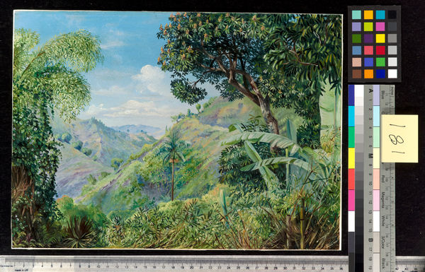 181. View on the Flamsted Road, Jamaica.. © RBG KEW