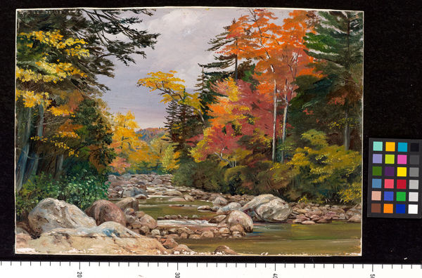 191 Autumn tints in the White Mountains, New Hampshier, United States.. © RBG KEW