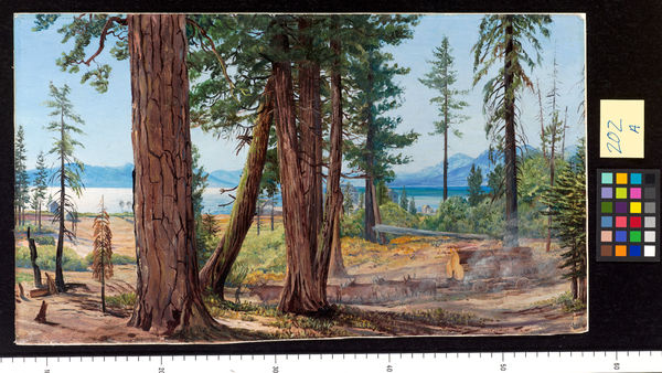 202. Lake Tahoe, California.. © RBG KEW