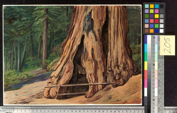 205. Home of an Old Trapper in the Trunk of a Big Tree, Calavera. © RBG KEW