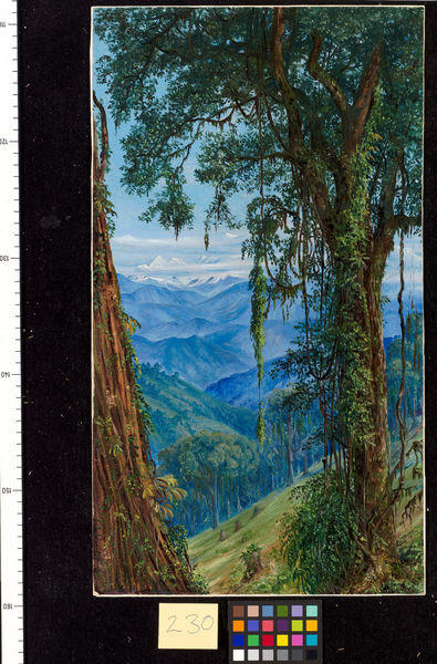230. View from Rungaroon, near Darjeeling, India.. © RBG KEW