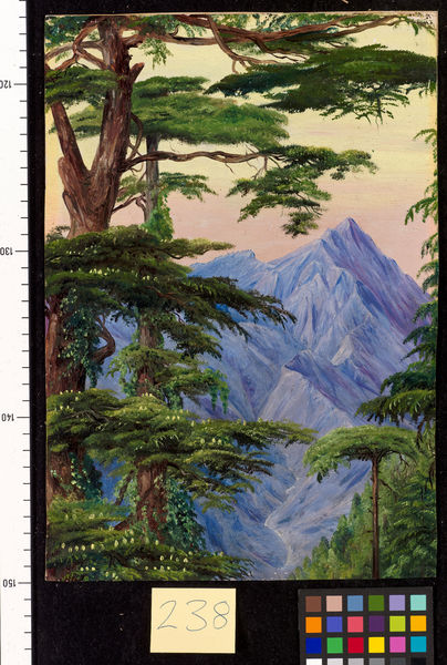 238. Deodars and the Choor Mountain, from Nahl Dehra, India.. © RBG KEW
