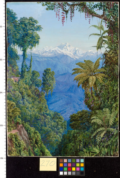 270. Distant View of Kinchinjunga from Darjeeling.. © RBG KEW