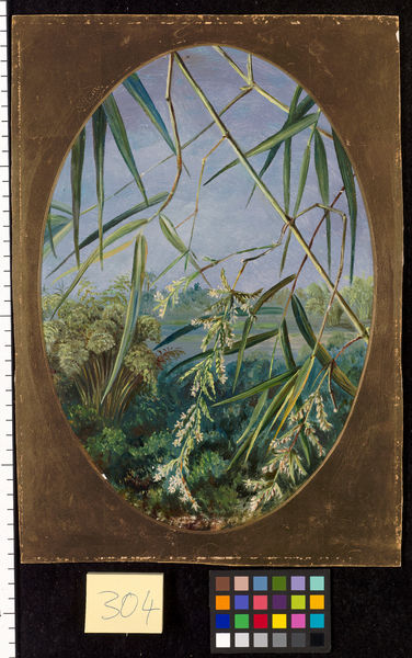 304. Flowers of the Common Bamboo with Tufts of the Plants behin. © RBG KEW