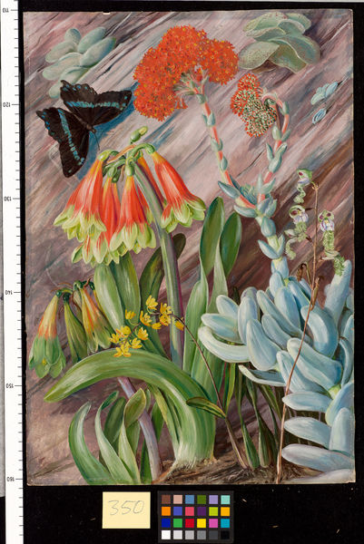 350. Red and green Cyrtanthus, Crassula, and Orchids, South Afri. © RBG KEW