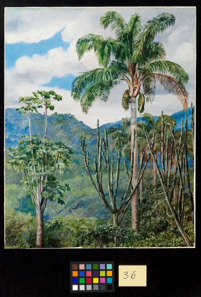 36. View in Brazil near 0uro Preto with Oil Palms.. © RBG KEW