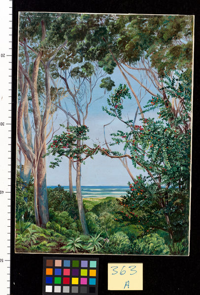 363. Trees from the Artist's Hut at St. John's, South Africa.. © RBG KEW