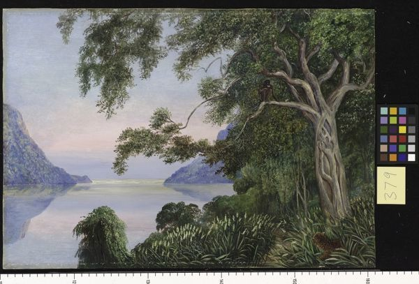 379. Mouth of the St. John's River, Kaifraria, and aboriginal. © RBG KEW