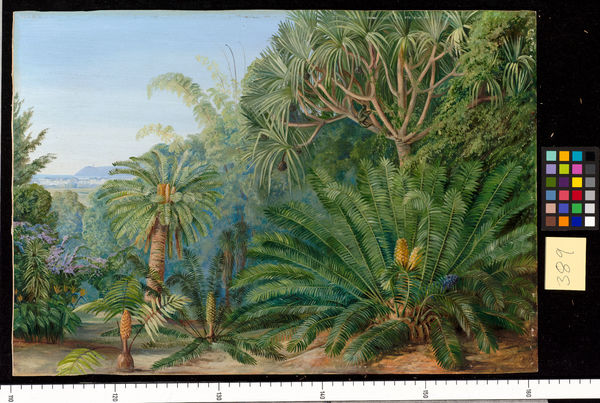 389. Cycads. Screw-pines and Bamboos, with Durban in the distanc. © RBG KEW