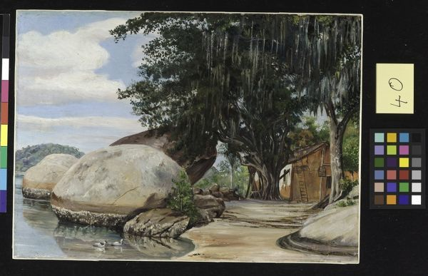 40. Boulders, Fisherman's Cottage and Tree hung with Air Plant,. © RBG KEW