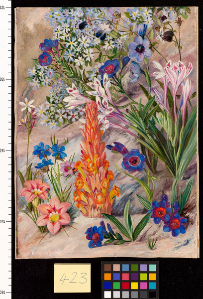 423. A Medley from Groot Post, South Africa.. © RBG KEW