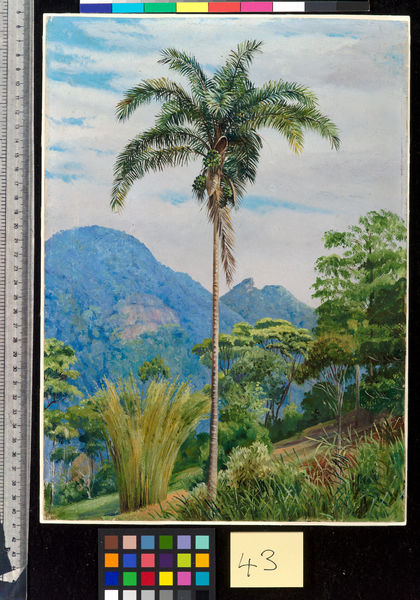 43. Tijuca, Brazil, with a Palm in the foreground.. © RBG KEW