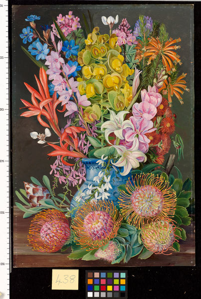 438. Wild Flowers of Ceres, South Africa.. © RBG KEW