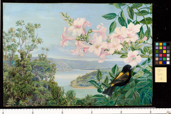 439. View on the Kowie River, with Trumpet Flower in front.. © RBG KEW