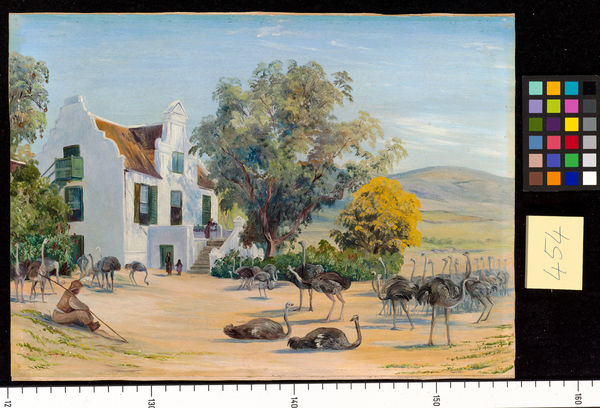 454. Ostrich Farming at Groot Post, South Africa.. © RBG KEW