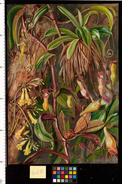468. Seychelles Pitcher Plant and Bilimb Marron.. © RBG KEW
