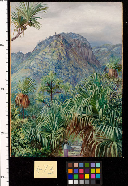 473. Screw-Pines on the hills of Mahe, Seychelles.. © RBG KEW