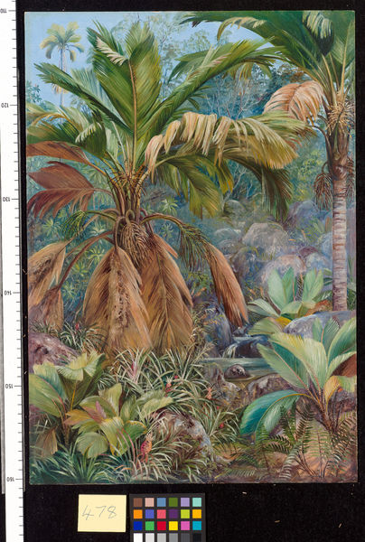 478. Wild Pine Apples, and Stevensonia and other Palms, Praslin.. © RBG KEW