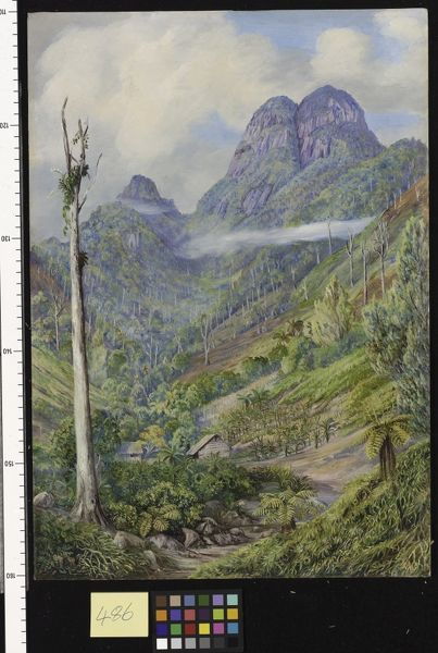 486. The highest point in Mahe with dead Capucin trees in the va. © RBG KEW