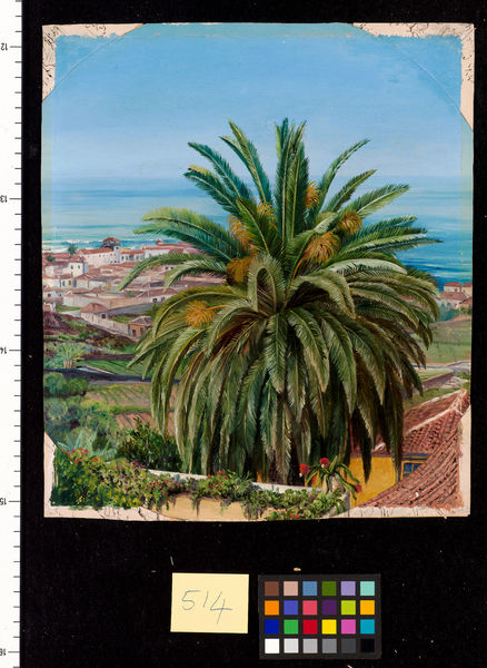 514. View of Puerto de Orotava, Teneriffe, from the Sitio del Pa. © RBG KEW