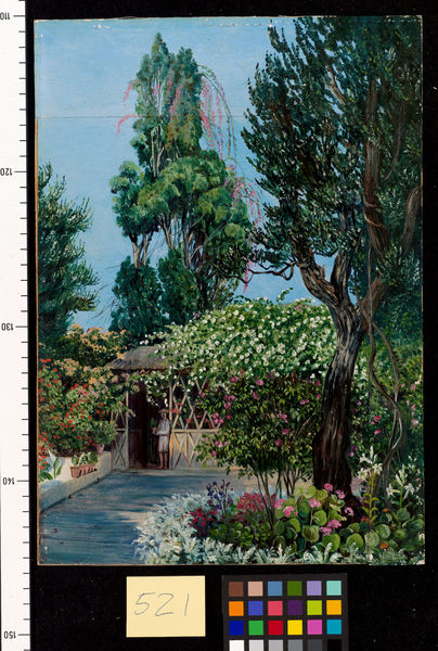 521. Scene in Mr. Smith's Garden, Teneriffe.. © RBG KEW
