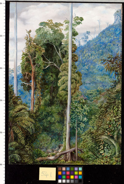 541. View of the Hill of Tegora, Borneo.. © RBG KEW