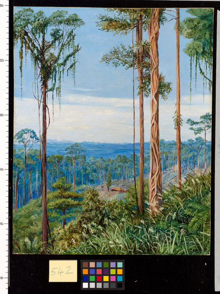 542. View of Matang, Borneo.. © RBG KEW