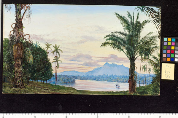 557. View of Matang and River, Sarawak, Borneo.. © RBG KEW