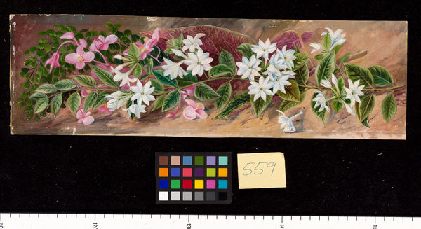 559. Flowers of a Jasmine and a Pink Begonia, Borneo.. © RBG KEW