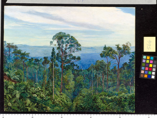564. View from Matang over the Great Swamp Sarawak, Borneo.. © RBG KEW