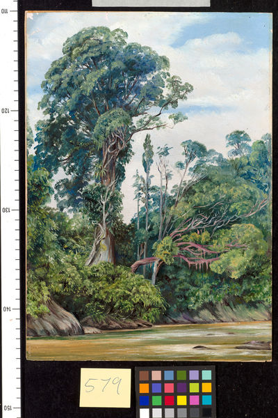 579. Tree covered with Epiphytes, and a Palawan tree, Sarawak.. © RBG KEW