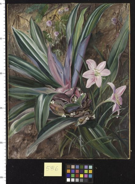 586. Two cultivated Plants, painted at Singapore.. © RBG KEW
