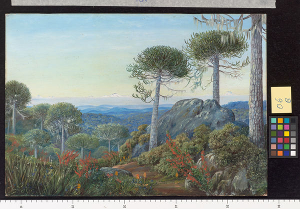 6. Seven Snowy Peaks seen from the Araucaria Forest, Chili.. © RBG KEW