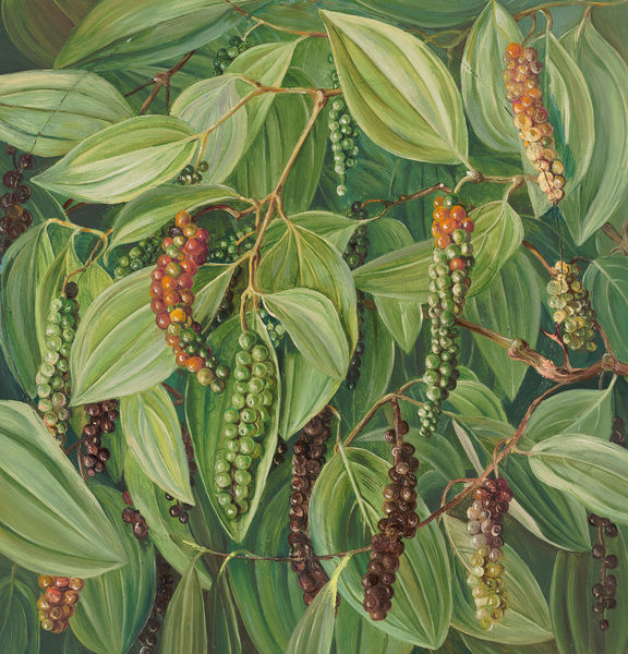 613. Foliage, Flowers, and Fruit of the Pepper plant.. © RBG KEW
