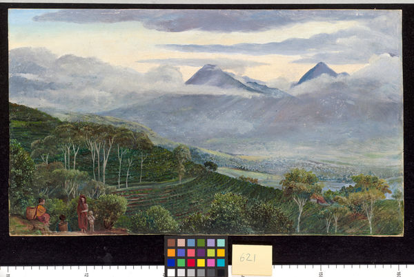 621. The Papandayang Volcano, Java, seen from Mr. Ho11e's tea pl. © RBG KEW