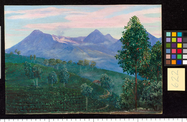622. Another View of Papandayang, with Jak fruit Tree in the for. © RBG KEW
