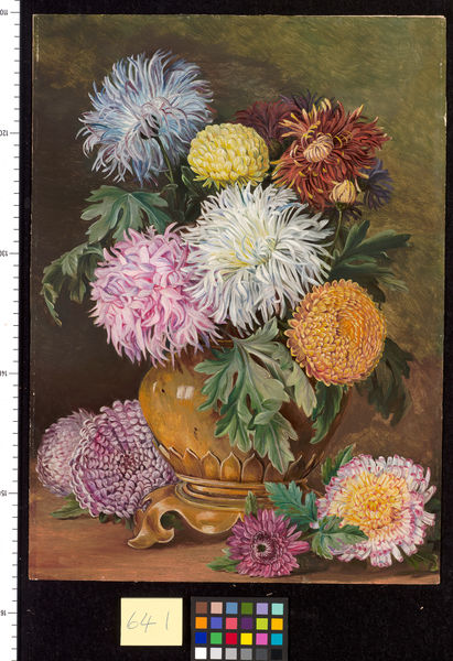 641. Japanese Chrysanthemums, cultivated in this country.. © RBG KEW