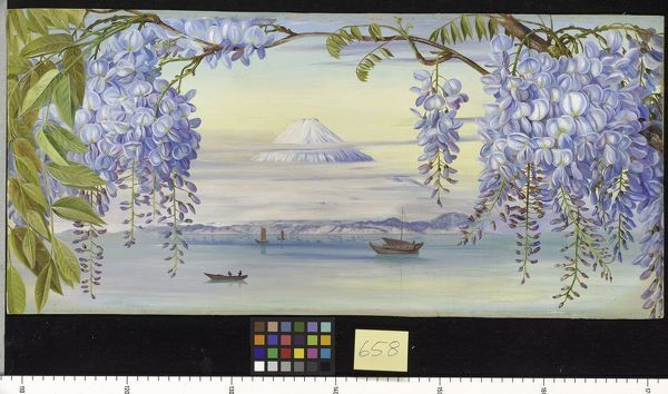658. Distant View of Mount Fujiyama, Japan, and Wistaria.. © RBG KEW